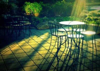朝の庭は気持ちがいい